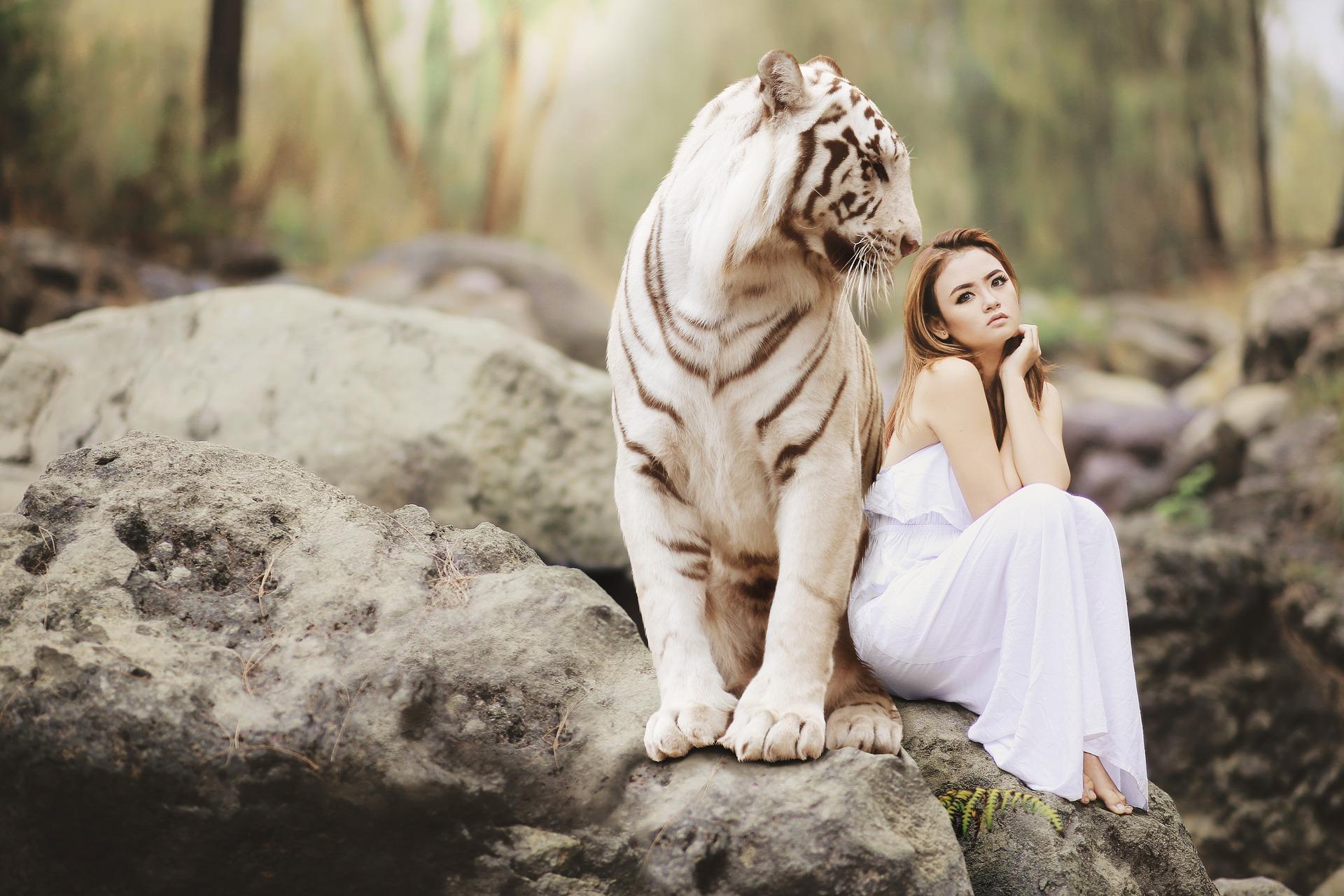 amore tigre piacersi amarsi
